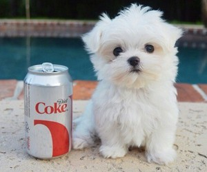 adorable, coke, and puppy image
