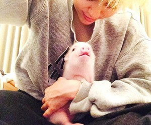 miley cyrus, miley, and pig image