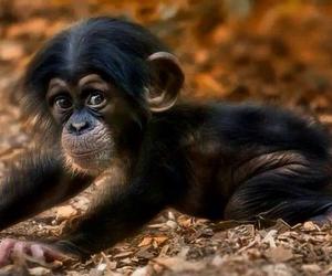 animals, baby, and ilikeit image
