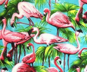 flamingo, pink, and wallpaper image