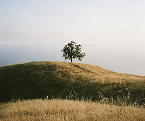 tree, field, and nature image