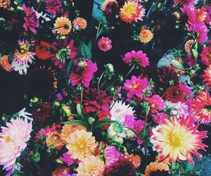 background and flower image