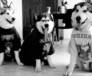 black and white, dogs, and metal image