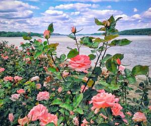 beautiful, danube, and nature image