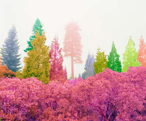 tree, colorful, and forest image