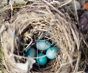 bird nest image