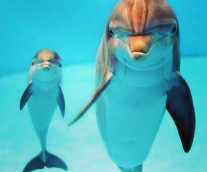 dolphin, cute, and animals image