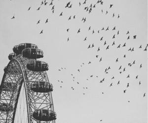 bird, sky, and london image