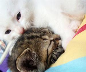 cat, cute, and cats image