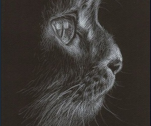 cat, black, and draw image