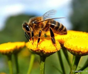 bees, insects, and bij image