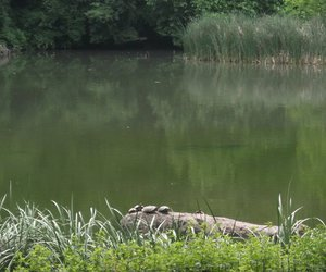Central Park, pond, and turtles image