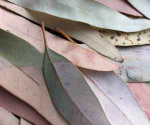 eucalyptus, photography, and alanna image