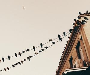 bird and city image