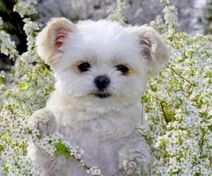 adorable, flowers, and puppy image