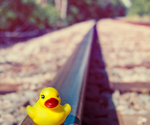duck, nice, and photography image