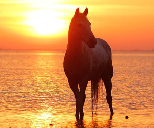 horse, beautiful, and sunset image