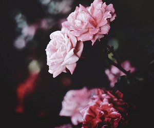 nature and pink flowers image