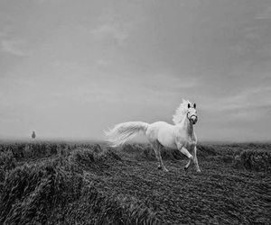 black and white, free, and horse image