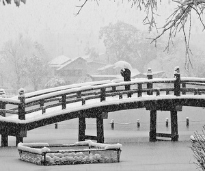snow, black and white, and winter image