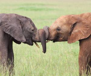 elephant, love, and animal image