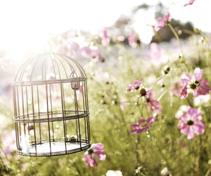 birdcage and flowers image