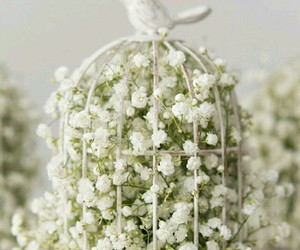 flowers, white, and cage image