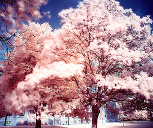 tree, pink, and japan image