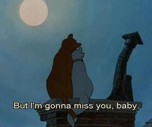 love, cat, and disney image