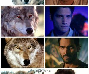 teen wolf, wolf, and stiles stilinski image