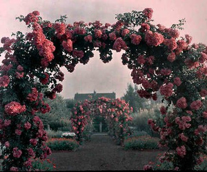 arches, flowers, and garden image