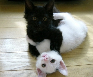 animals and cute image