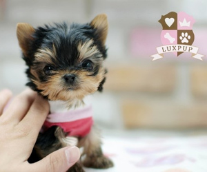 animals, puppy, and cute puppies image