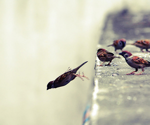 birds and fly image