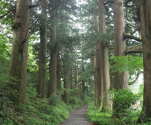 beautiful, path, and hakone image