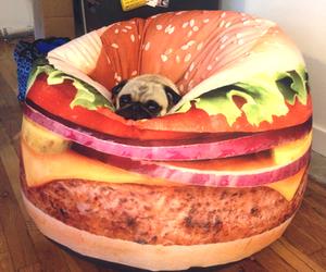 dog, cute, and hamburger image
