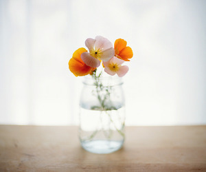 flowers and orange image