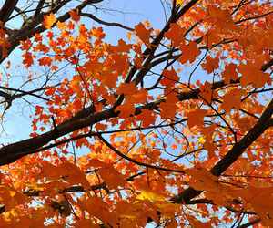 autumn, colorful, and photography image