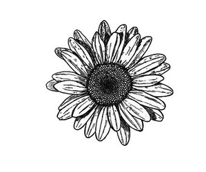flowers, drawing, and overlay image