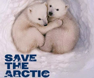 bears, save the artic, and danger image