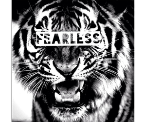 fearless, tiger, and cat image