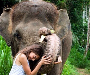 beautiful, elephant, and pretty image