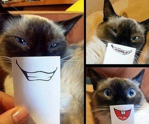 animal, funny, and cats image