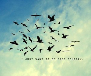 bird, free, and quotes image