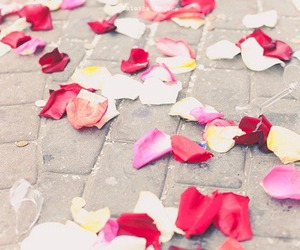flowers, rose, and petals image