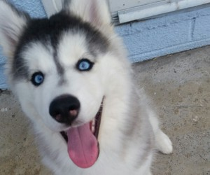 dog, sweet, and cute image