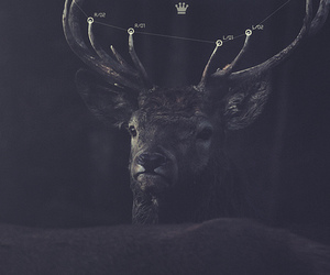 animals, music video, and buck image