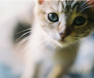 animal, cat, and sweet image