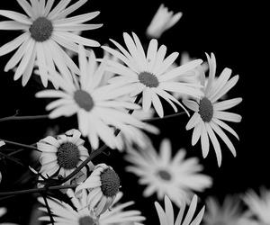 b&w, black and white, and pale image