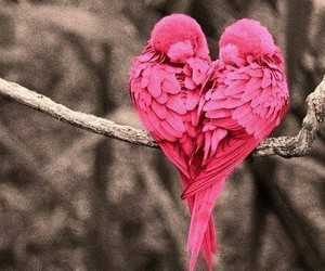 birds, heart, and nature image